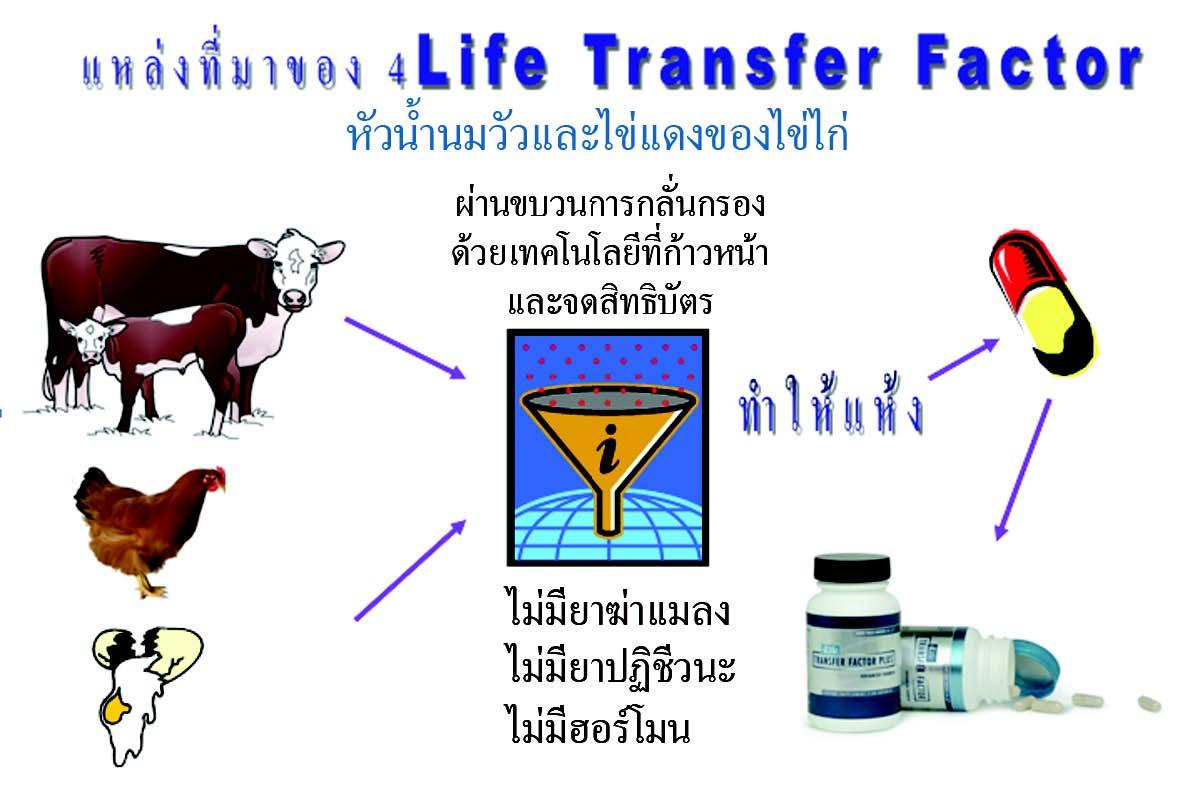 แหล่งที่มาของ 4Life transfer factor